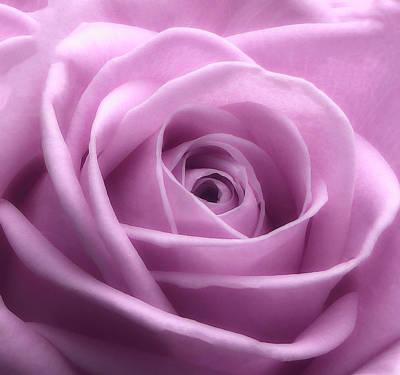 Soft Pink Beauty 3 Art Print
