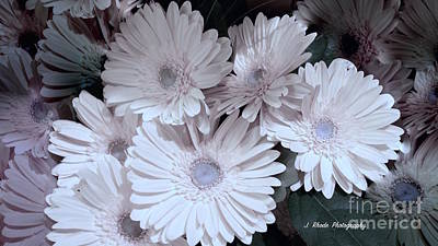 Soft Pink Daisy Bouquet Art Print by Jeannie Rhode