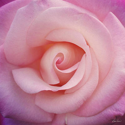Photograph - Soft Pink  by Diana Haronis