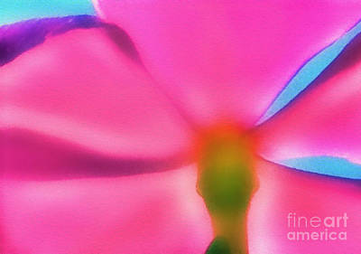 Photograph - Soft Pink Flower by Judi Bagwell