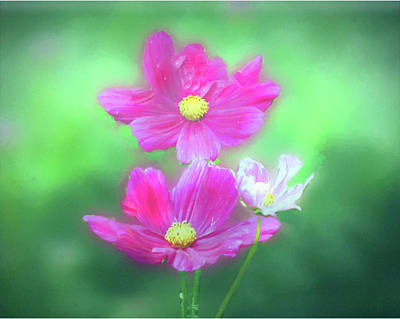 Digital Art - Soft Pink Flowers by Rusty R Smith
