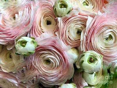 Photograph - Soft Pink Ranunculus  by Jeannie Rhode