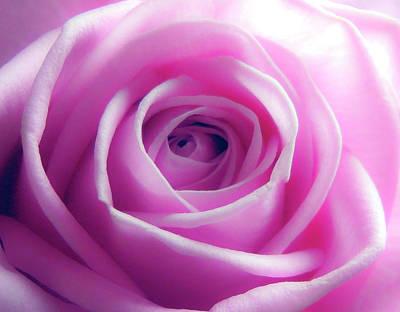 Photograph - Soft Pink Rose 5 by Johanna Hurmerinta