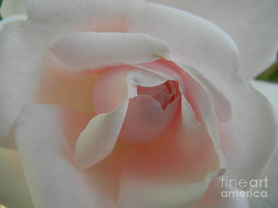 Photograph - Soft Pink Rose by Jim And Emily Bush