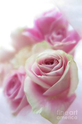 Photograph - Soft Pink Roses 2 by Tara Shalton