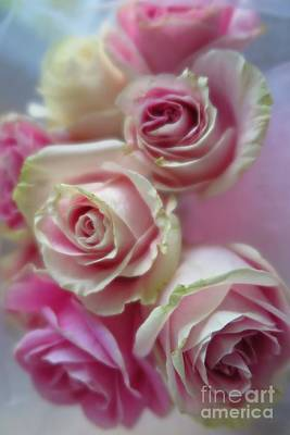 Photograph - Soft Pink Roses by Tara Shalton