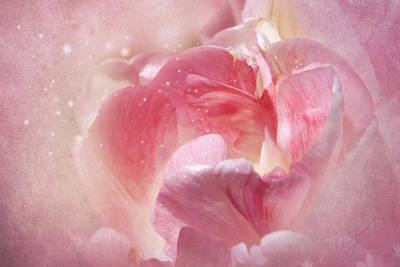 Photograph - Soft Pink Tulips by Ann Lauwers