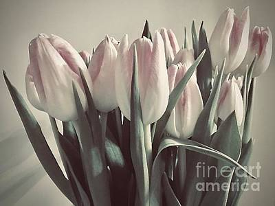 Photograph - Soft Pink Tulips by Jeannie Rhode