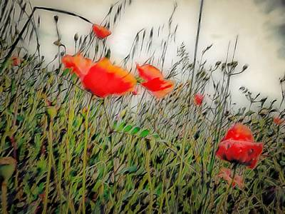 Digital Art - Soft Poppy Dreams by Dorothy Berry-Lound