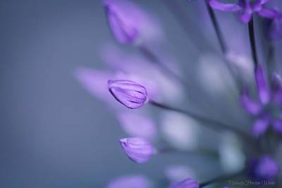 Photograph - Soft Purple by Michaela Preston