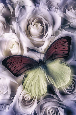 Soft Red And Yellow Butterfly Art Print