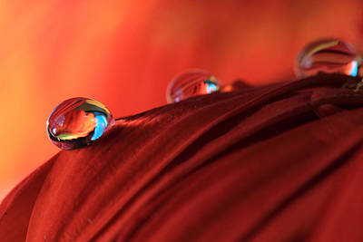 Photograph - Soft Red Petals With Water Drops by Angela Murdock