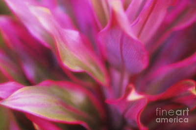 Soft Red Ti Art Print by Ron Dahlquist - Printscapes