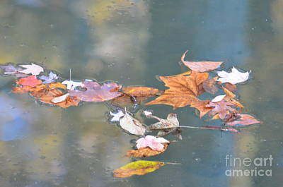 Photograph - Soft Reflections Of Autumn by Maria Urso