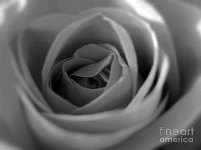 Photograph - Soft Rose In Black And White by Nina Ficur Feenan