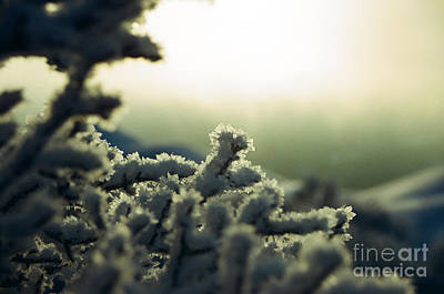Photograph - Soft Ryme Ice On Monadnock - 2 by Larry Davis Custom Photography