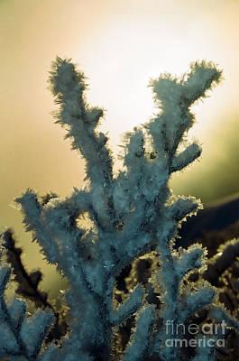Photograph - Soft Ryme Ice On Monadnock - 3 by Larry Davis Custom Photography