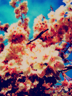 Photograph - Soft Sakura by Eve Penman
