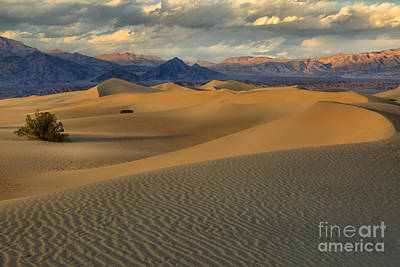 Photograph - Soft Sand Dune Curves by Adam Jewell