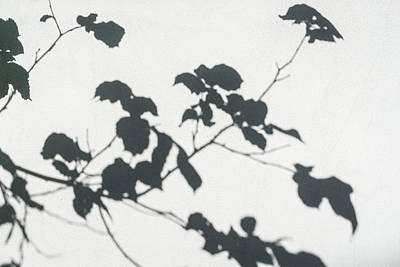 Photograph - Soft Silvery Shadows - Exquisite Broadleaved Patterns by Georgia Mizuleva