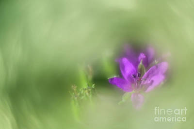 Photograph - Soft Spring I by Hernan Bua