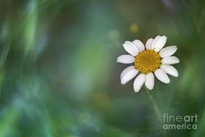 Photograph - Soft Spring IIi by Hernan Bua