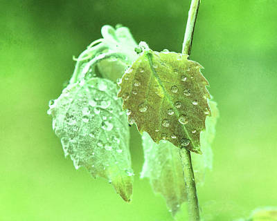 Photograph - Soft Spring Rains by Susan Capuano