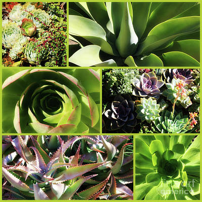 Photograph - Soft Succulents Collage by Carol Groenen