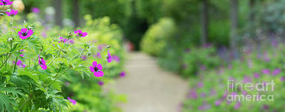 Photograph - Soft Summer Border by Tim Gainey