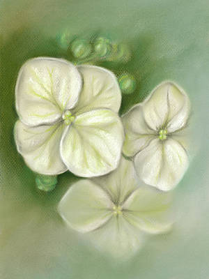 Pastel - Soft Summer Hydrangea Blossoms by MM Anderson