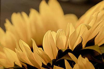 Photograph - Soft Summer Light 2 by Teresa Wilson