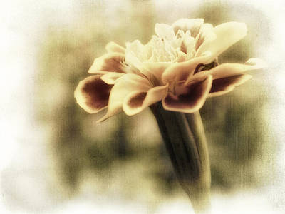 Photograph - Soft Summer Memory - Photography by Ann Powell