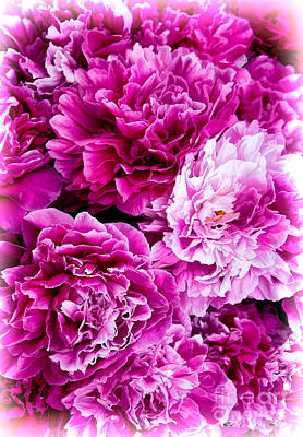 Photograph - Soft Sweet Pink Peonies by Barbara McMahon