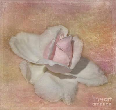 Photograph - Soft Textured Rosebud by Teresa Wilson