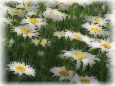 Photograph - Soft Touch Daisy by Debra     Vatalaro