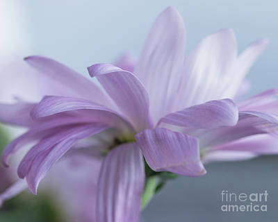 Photograph - Soft Touch by Linda Hoye