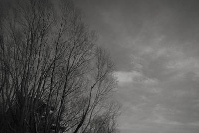 Photograph - Soft Tree Line by Alex Leonard