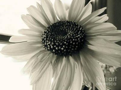 Soft White Light Art Print by Trish Hale