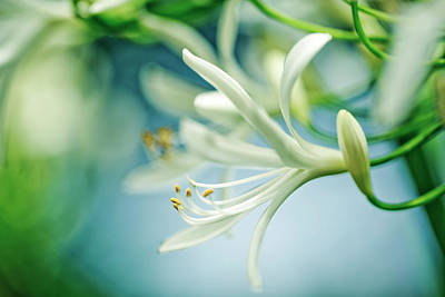 Springtime Photograph - Soft White by Nailia Schwarz