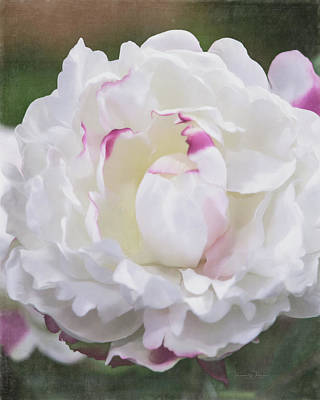 Photograph - Soft White Peony by Teresa Wilson