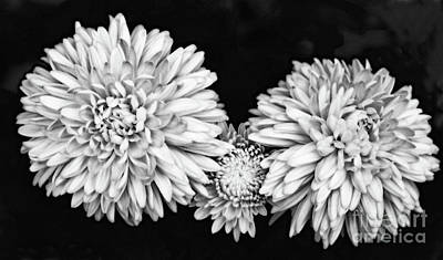 Photograph - Soft  White Triplet by Mary Haber