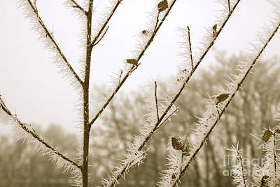 Ice On Branch Photograph - Soft Winter Sepia Branches by Carol Groenen