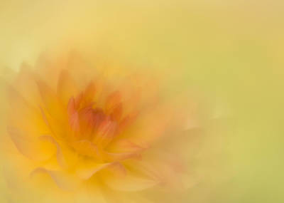 Photograph - Soft Gold by Kasandra Sproson