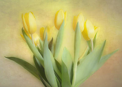 Antique Maps - Soft Yellow Tulips by Hal Halli