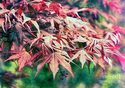 Photograph - Softly Autumn by Jean OKeeffe Macro Abundance Art