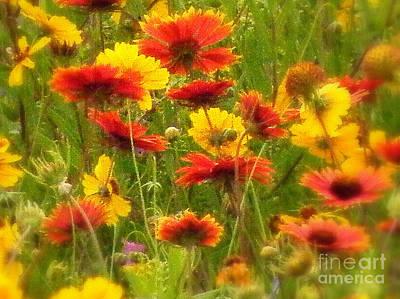 Art By Jake Photograph - Softly Blooming by Joe Jake Pratt