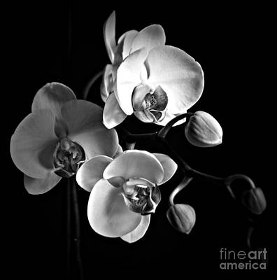 Photograph - Softly Bw by Chalet Roome-Rigdon