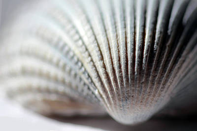 Photograph - Softly Colored Seashell by Angela Murdock