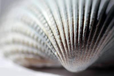Photograph - Softly Colored Seashell by Angela Murdock