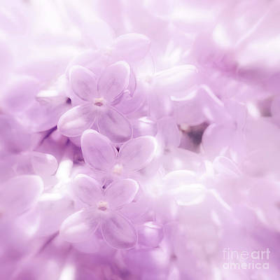 Photograph - Softly Comes The Spring by Mark Alder